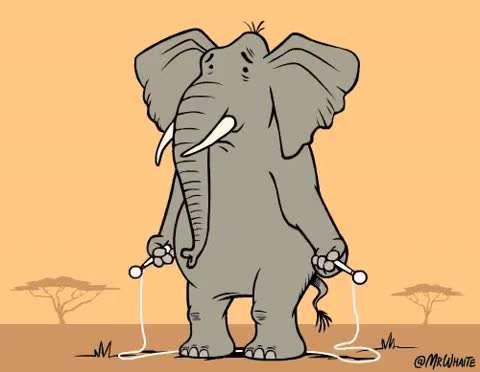 طناب زدن فیل خسته