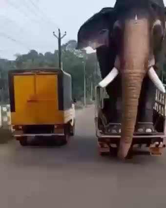 ماشین سواری فیل