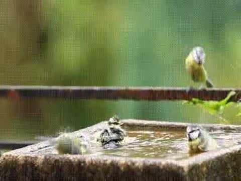حمام گنجشک ها