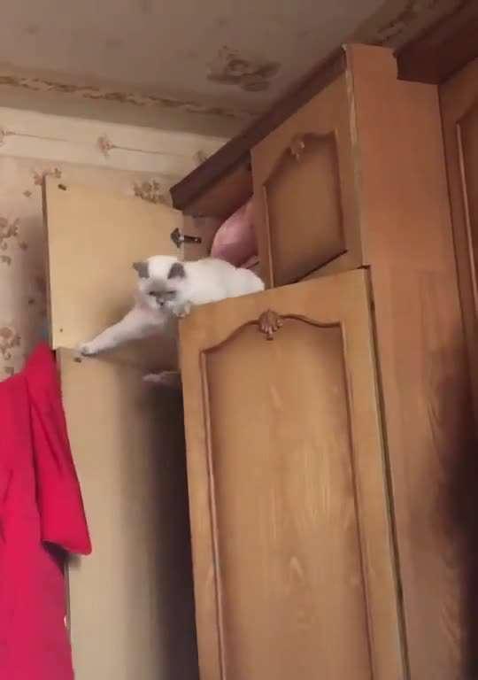 گیر کردن گربه