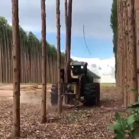 روش جالب قطع درختان