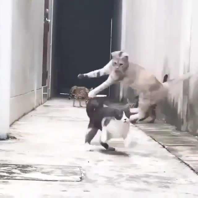 فرار گربه ای