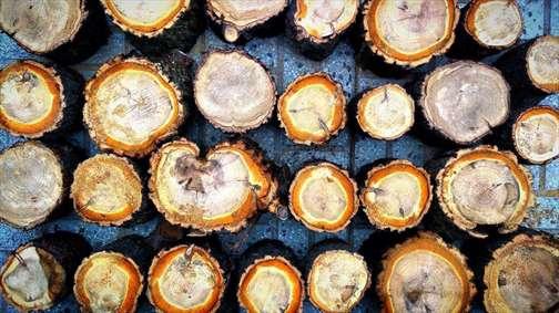 برش های چوب