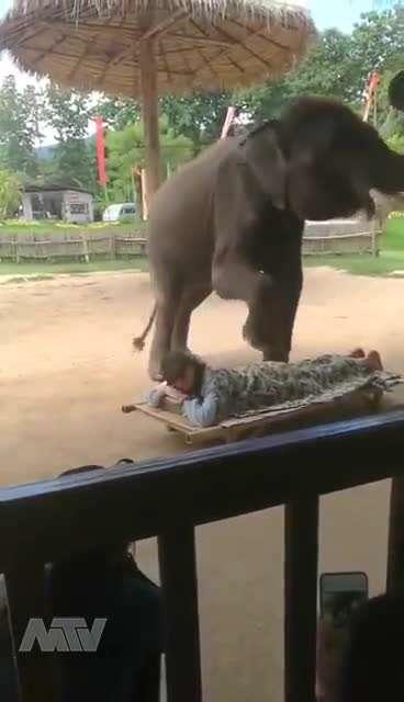 ماساژ فیلی