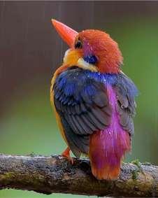 پرنده فوق العاده زیبا