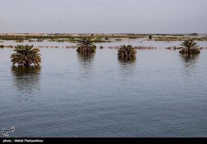 نابودی هزاران نخل براثر سیل در روستای ابومشیلش