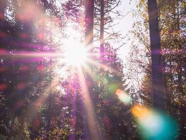 خورشید در جنگل