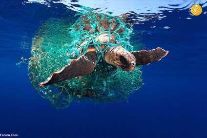 برترین تصاویر مسابقه عکاسی زیر آب در سال ۲۰۱۹