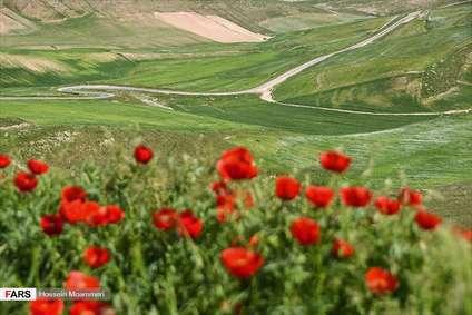 بهارِ خراسانِ شمالی