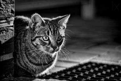 تصاویر جالب و خنده دار گربه ها