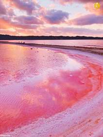 دریاچه صورتی رنگ!