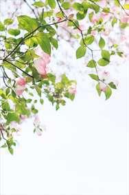 شاخه و گل بهاری