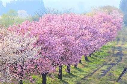 تصاویری از زیبایی های بهار در سراسر جهان