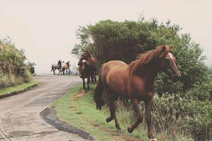 اسب رها