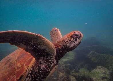 لاکپشت ها