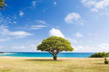 درختان ساحلی