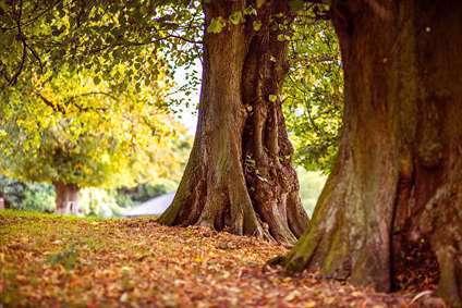 درختان