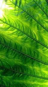 زیبایی خلق برگ ها