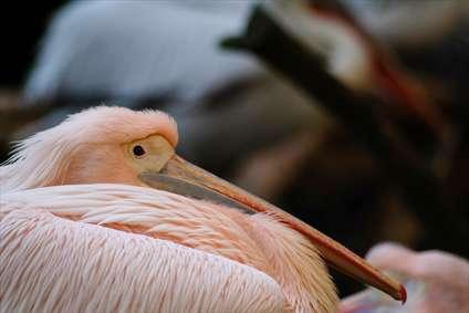 حواصیل و پرنده های مهاجر