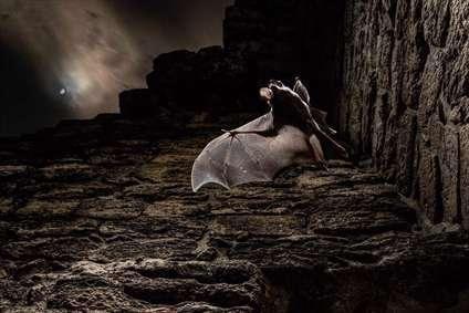 خفاش خونآشام