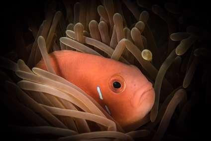 ماهی های زیبای زیر آب