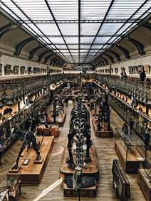 نمایشگاه فسیل های دانیاسور