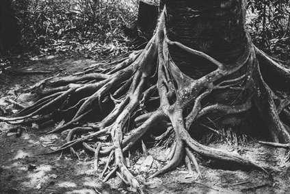 ریشه های عجیب