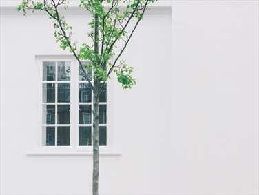درخت و پنجره