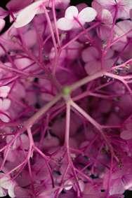 زیبایی گل