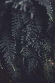 زمینه برگ تیره