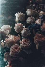 گل های خشکیده