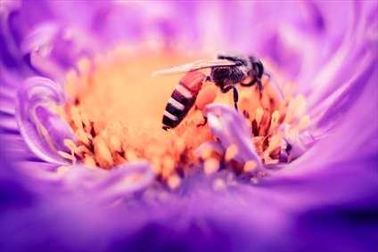 زنبورهای عسل
