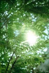 زمینه هایی از نور