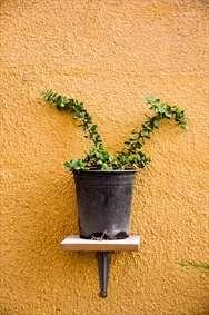 گلدان بر دیوار