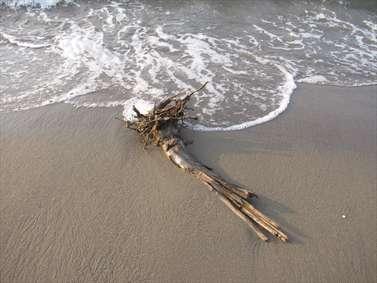 عکس های ساحل