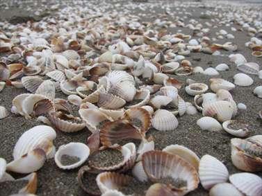 صدف های ساحل