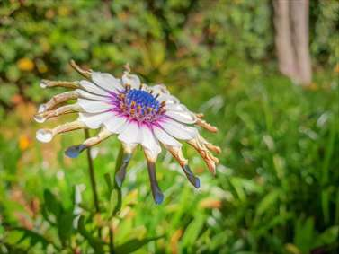 گل زیبای عجیب