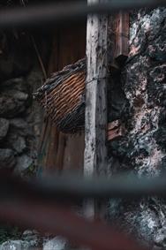 سبد خانه ی کوهی