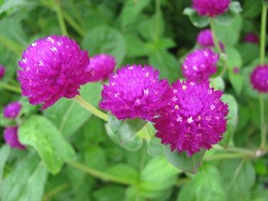 گل زیبا در گلستان
