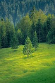 جنگل درختان زیبا