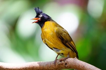 پرنده ی زیبا