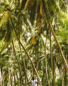 درختان استوایی