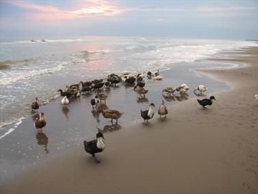 غازهای ساحل نشین