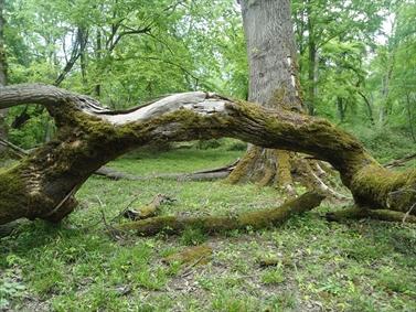 زیبایی های درختان جنگل