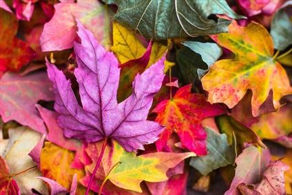 پاییز فصل رنگ ها