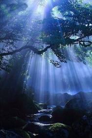 سایه ی نور