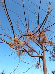 درخت در آسمان