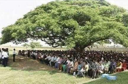 ارزش یک درخت