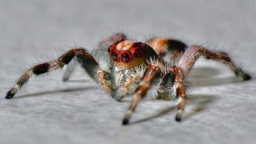 دنیای عنکبوتی