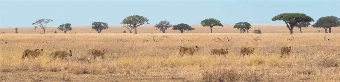 تصویر باز از حیات وحش